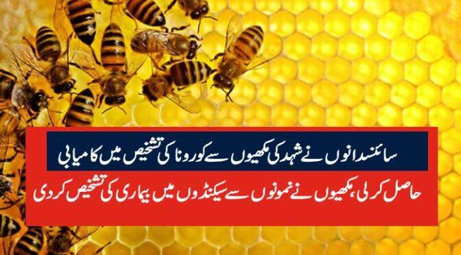 سائنسدانوں نے شہد کی مکھیوں سے کورونا کی تشخیص میں کامیابی  حاصل کرلی،مکھیوں نے نمونوں سے سیکنڈوں میں بیماری کی تشخیص کردی